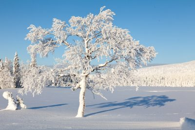 Suomalaista luontoa